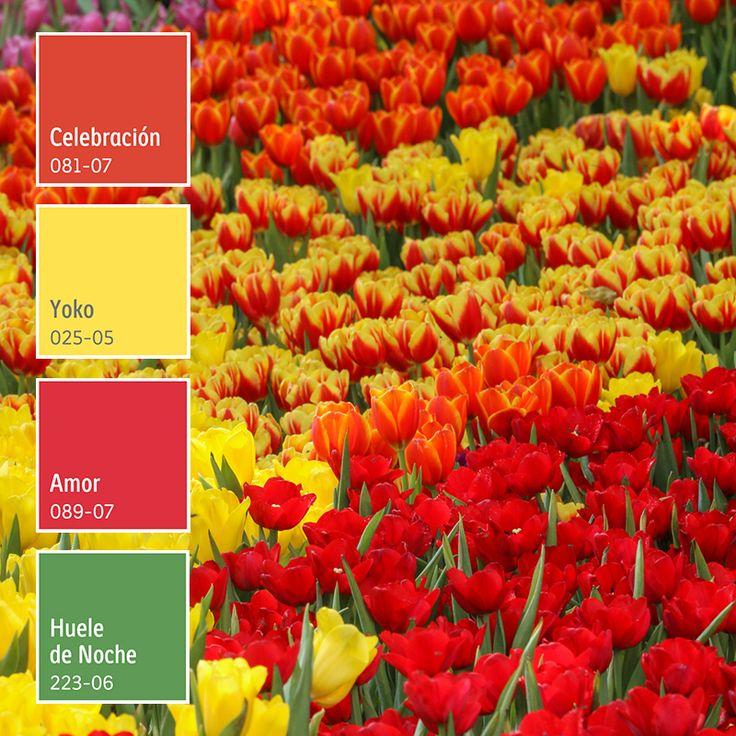Transforma tus espacios con colores brillantes que alegrarán tu vida. ¡Descubre más! Gaara, Aesthetic Photo, Colors, Room, Bright Colours, Color Palettes, Terrace, Spaces, Bedroom