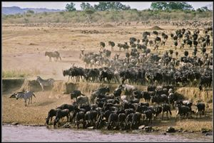 Serengetti.....the great migration
