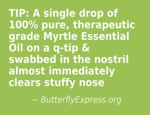 Use Myrtle Essential Oil to clear a stuffy nose
