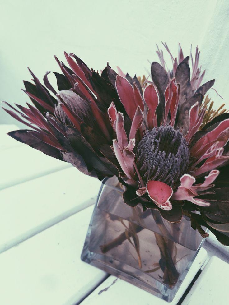 #southafrica #stellenbosch #proteas #esthetics