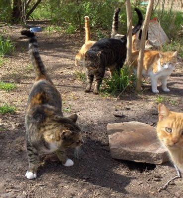 ally cat allies