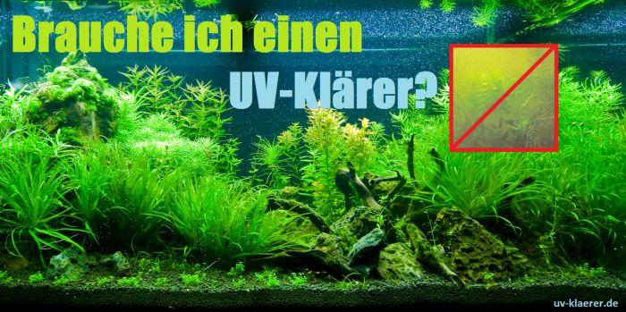 UV-Klärer gegen Algen im Aquarium