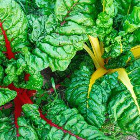 Swiss chard | Summer Produce | Pinterest