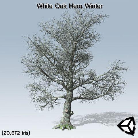 White Oak Hero Winter #Hero#Oak#White#SpeedTree | Factors