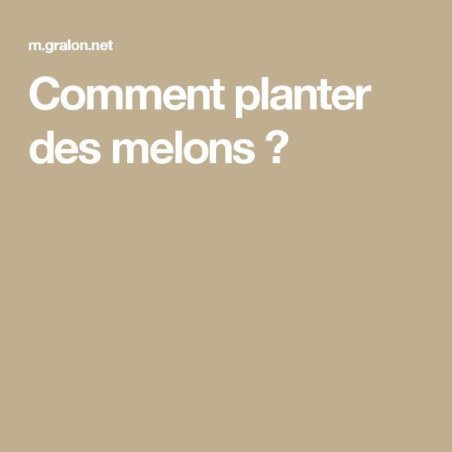 Comment planter des melons ?