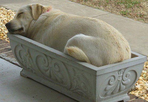 Собаки, которым очень удобно
