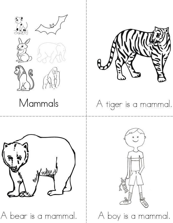 Mammals Book - Twisty Noodle | Minibücher, Säugetiere, Tiere