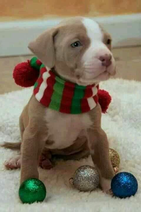 What a merry christmas this is sooo cute just for Christmas pictures of baby animals