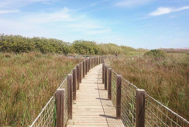 Passarella a la natura | Nature boardwalk  #bonanit #buenasnoches #goodnight