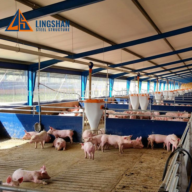 Hot galvanizing Steel Pig House and Livestock Sheds for Sale
