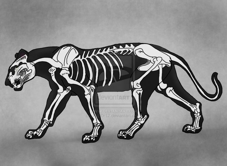 panther skeleton - Google Search | Robots | Pinterest ...
