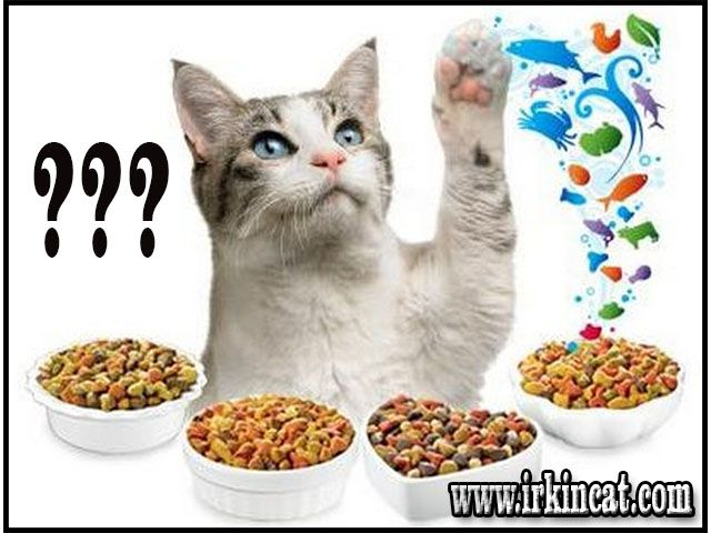 What Do Kittens Eat This Is What Must Be Prepared For Kittens In 2020 What Do Kittens Eat Kittens Kitten Food