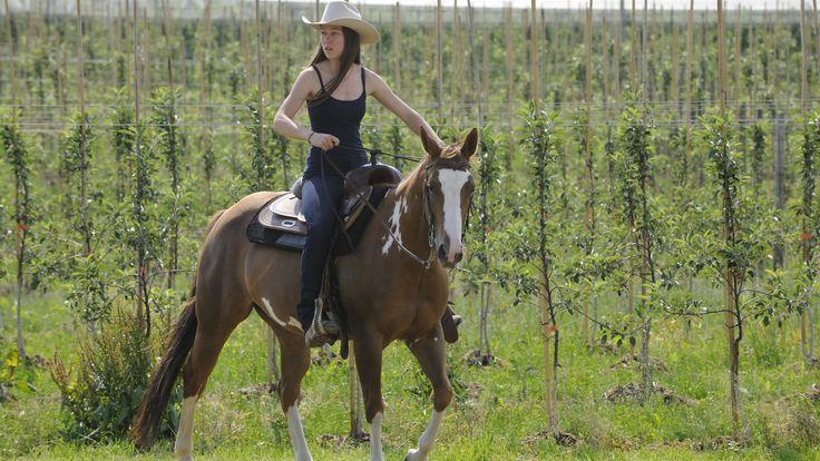 Das Landhotel garni Gerbehof hat einen angeschlossenen Reiterhof und bietet sich für #Urlaub mit #Pferd an: http://media1.clearingstation.de/4356/231460.jpg/1920x1080s
