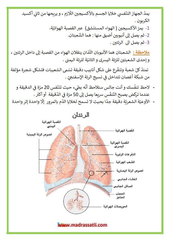 التنفس عند الانسان مراحل الت نف س الشهيق و الزفير Pie Chart Chart Diagram