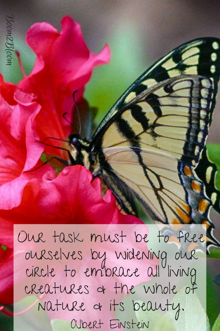 Our task must be to free ourselves by widening our circle to embrace all living creatures & the whole of nature and its beauty quote by Albert Einstein. Nature Quote. #NatureQuote #Einstein #Quotes