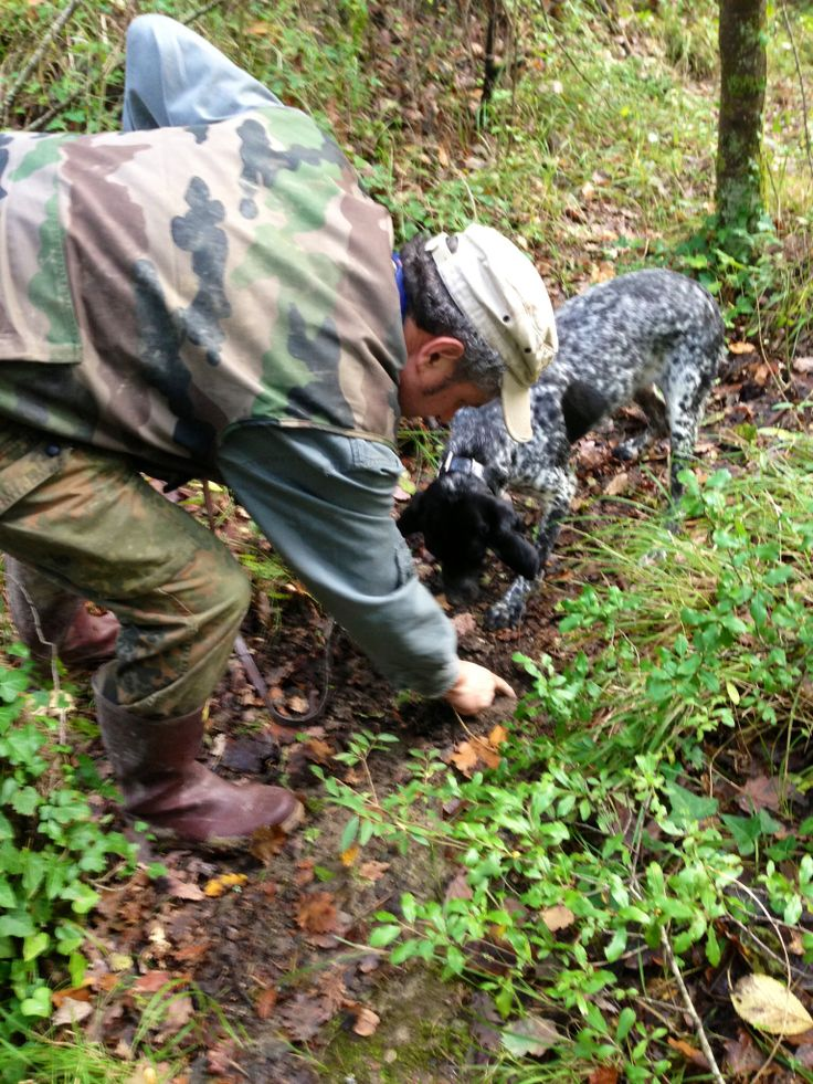 Truffle hunting at Caimeli