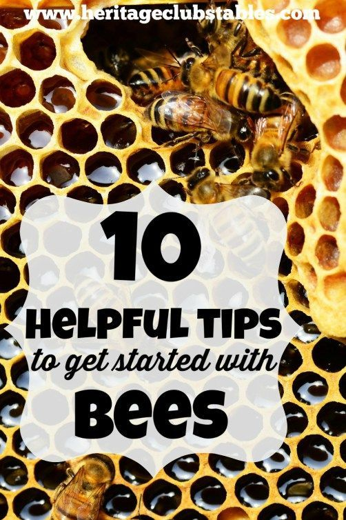 Are you ready to get started with bees but not really knowing how or where to begin? Follow these 10 helpful tips to getting started with bees!