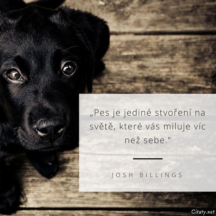 JOSH_BILLINGS_-_Pes_je_jediné_stvoření_na_světě_které_vás_miluje_víc_než_sebe..jpg (800×800)