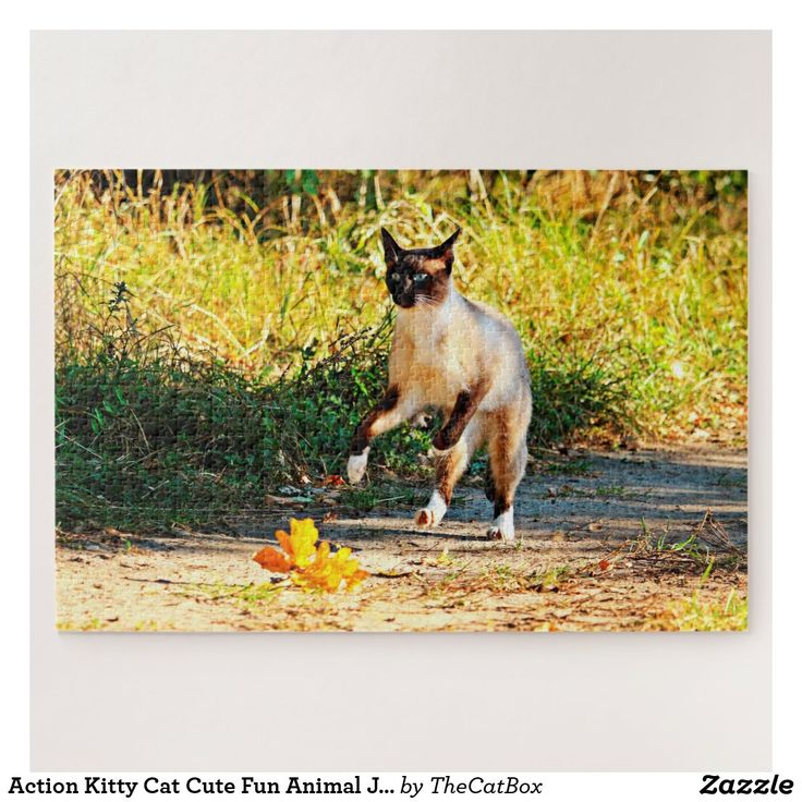 Action Kitty Cat Cute Fun Animal Jigsaw Puzzle Zazzle