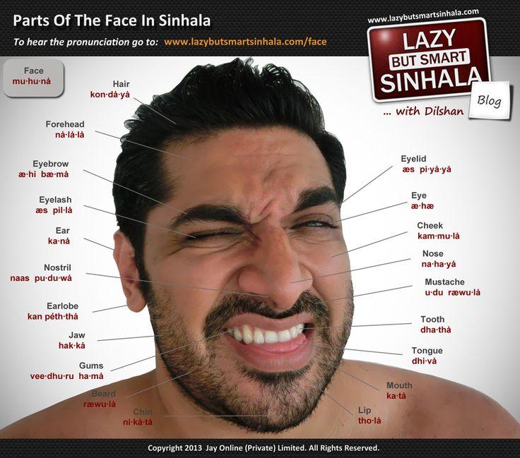 Foto utile per le parti del viso, da aggiungere i nomi italiani.