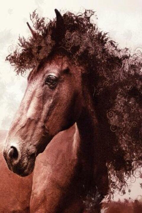 Curly Hair Horse Lol Animals Pinterest Horses Hair