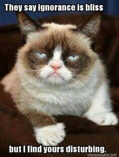 Grumpy Cat quote, humor, meme #GrumpyCat #Meme