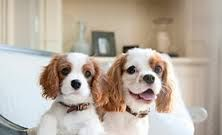 Dogs in Village Vet Animal Clinic,Broken Arrow,OK