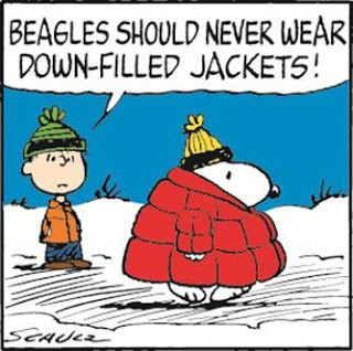 Beagle fashion advice...and if I was cold I'd wear it anyway!!