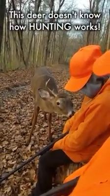 Deer doesn't know how hunting work