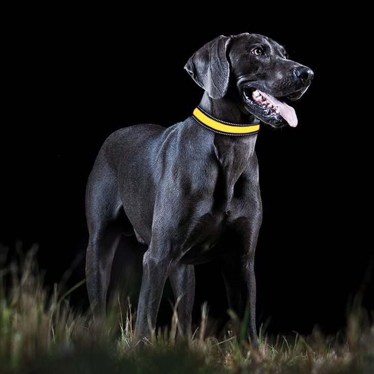 Our LED collars are perfect for any walk, especially when its dark out.