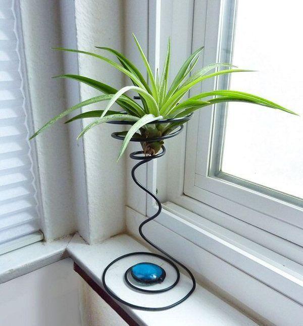 plante de aer 19