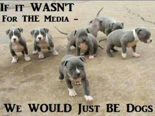 Don't breed discriminate. #dontblamethebreed #pitbulllove