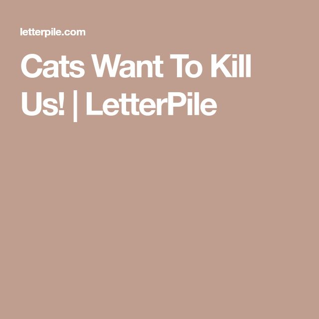 Cats Want To Kill Us! | LetterPile