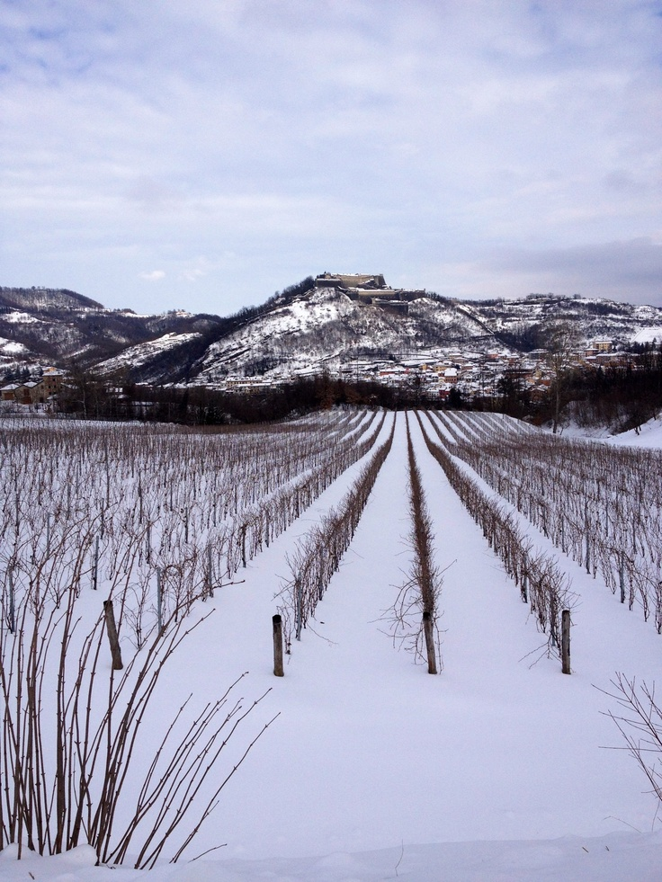 Gavi vineyards in winter...The Fortress and Gavi at the back