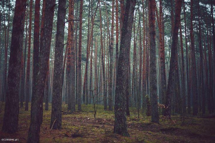 Kampinoski National Park. Poland. Forest. Wood