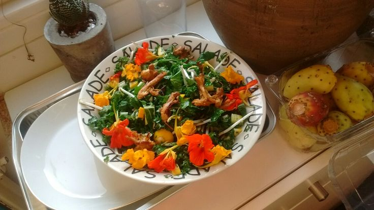 Bio Boerenkool snijbiet salade.  1 blad boerenkool, wat snijbiet, wat gele courgette, wat taugé en waterkers (bloem). Verse koriander.  Kip: koken, dan pluizen, dan opbakken met lekkere ketjap en evt nog andere smaak ketjap marinade.  Dressing: citroensap, olijfolie, honing, sesamolie, ketjap, peper.  Extra: doe er wat geweekte krenten over..