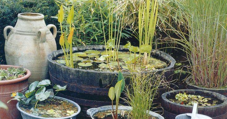Mini- vijvers  komen het beste tot hun recht als vorm en materiaalgebruik passen bij die van de tuin  als geheel, zoals een Chinese kruik ...