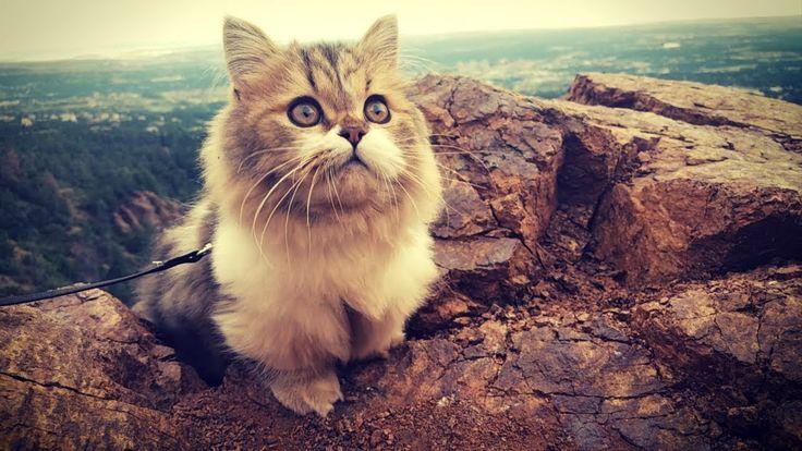 Milos Königreich :) www.youtube.com / …   – Süße Kätzchen & alles vom Stubentiger