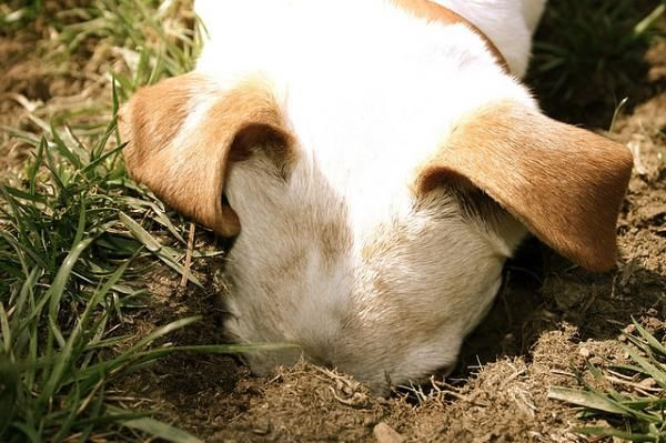 How To Stop A Dog Digging Holes In The Garden