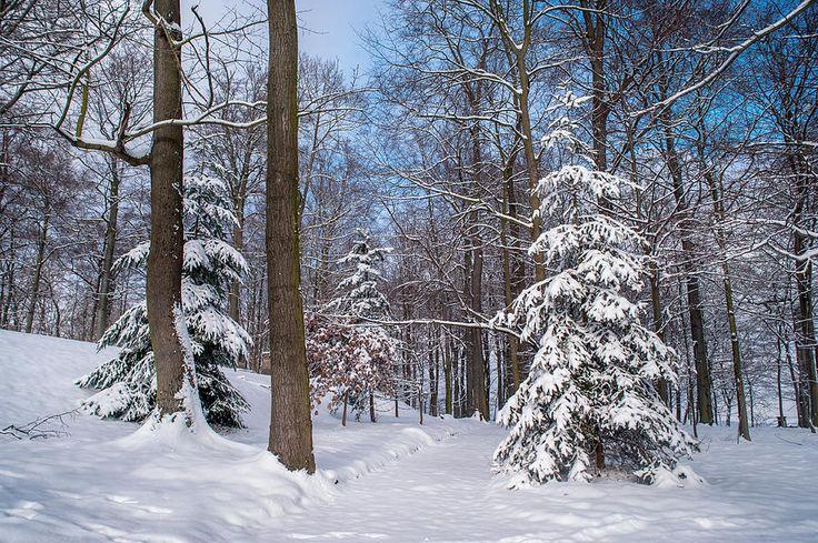 Winter Perfection by Jenny Rainbow