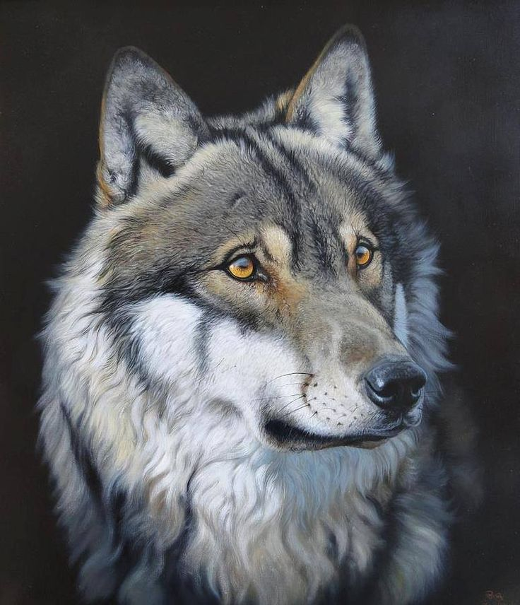 Roberto Bianchi ~ Wolf pastel art