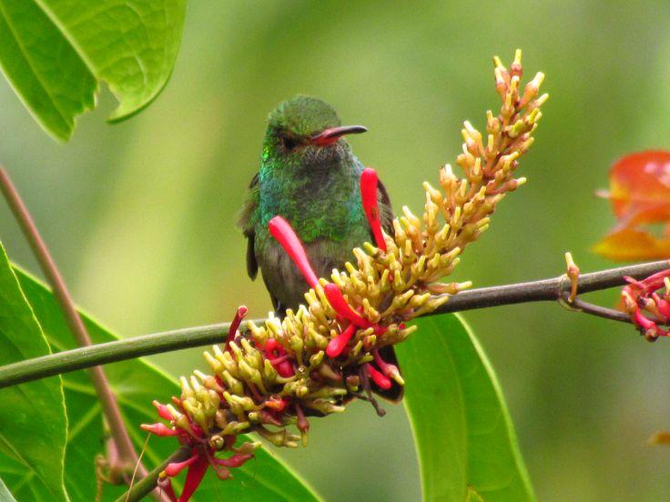 La magia del verde en la Oculta. El colibrí que posa.