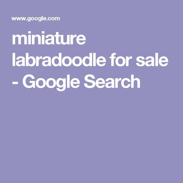 miniature labradoodle for sale - Google Search