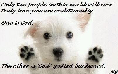 So true :): Dogs Quotes, Unconditional Love, Kitty Cat, Love You, Puppys, So True, Truths, Dogs Lovers, Animal