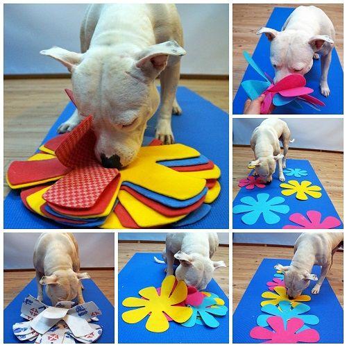 Spel van de maand | Hersenwerk voor Honden