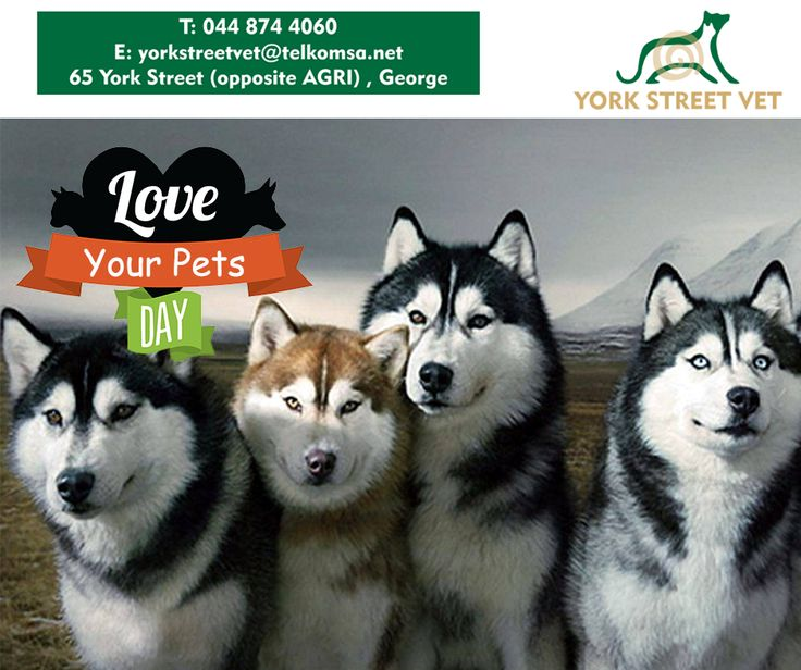 Today is a very special day as we celebrate Love Your Pet Day! Spoil your furry friends with healthy treats, take them for a walk and play with them, just to show them how much you love and appreciate them. #LoveYourPetDay #YorkStreetVets #pets