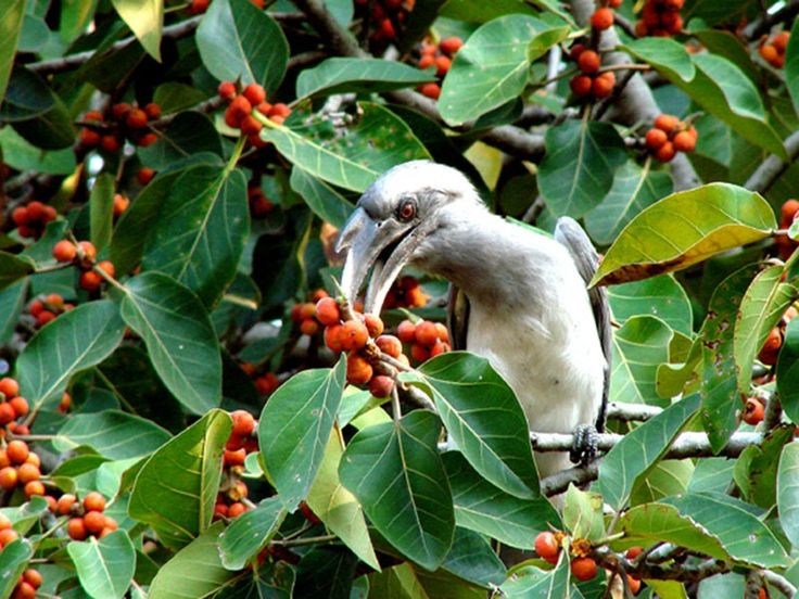 Karnala Bird Sanctuary in Maharashtra, India