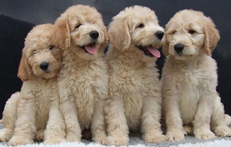 Best 25 New Puppy Checklist Ideas On Pinterest Puppy