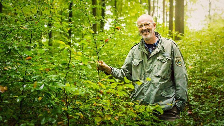 Guarda Florestal Alemão Afirma que as Árvores Também Têm Redes Sociais | O Único Planeta que Temos