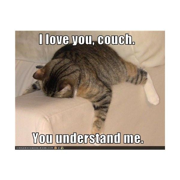 Lolcats 'n' Funny Pictures of Cats - I Can Has Cheezburger? ❤ liked on Polyvore featuring funny, quotes, backgrounds, animals, pictures, saying, text and phrase